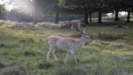 Get up close and personal with the Axis Spotted Deer in Richmond Park, London, UK