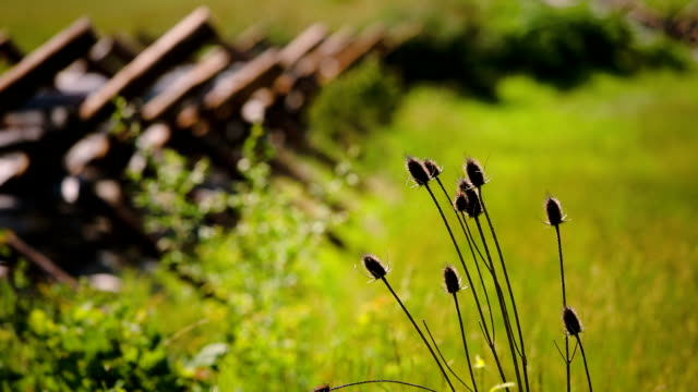 Gettysburg Battlefield plant life and fencing