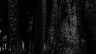 Ghost in dark forrest