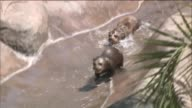 KTLA Giant Otter Pups debut at Los Angeles Zoo on July 16 2015