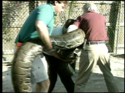 / giant python attempts to attack the men moving it into new pen at a Florida zoo / python on a cart man trying to move it when it lunges and nearly...