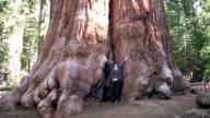 HD: Giant Sequoia