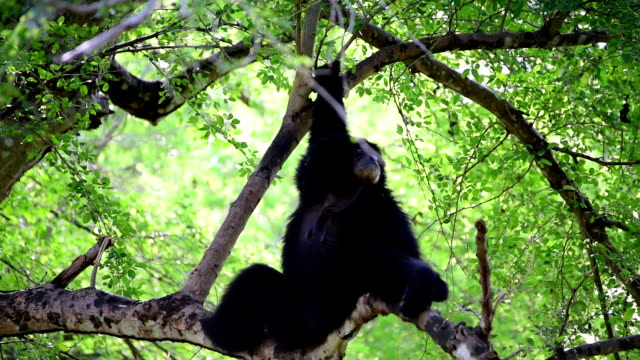 Gibbons on Tree
