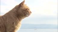 A ginger tabby cat sitting on the quay in the harbor, Ainoshima, Fukuoka, Japan