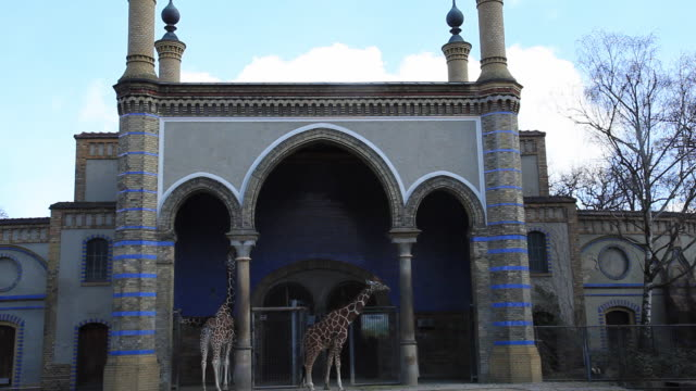 WS Giraffes standing in front of giraffes´ house in zoo, Berlin, Germany