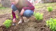 Girl digging in family's garden