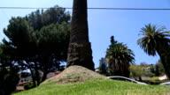 Mädchen tun Parkour--Seite Flipchart auf Baum