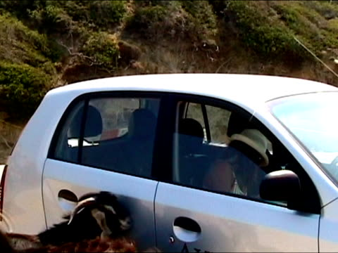 Girl feeding hungry goat  from iniside a car