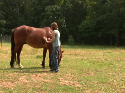 Girl grooming horse3 PAL