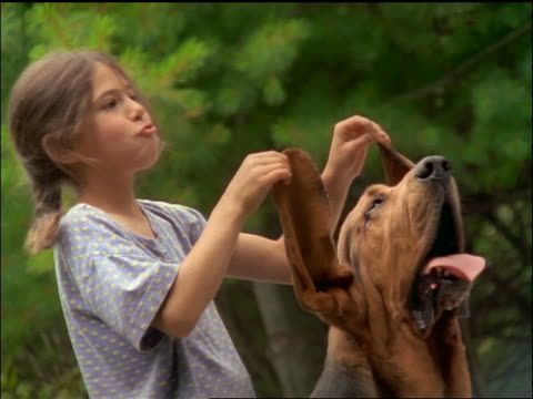Girl holding up long ears of panting bloodhound + laughing + making faces outdoors