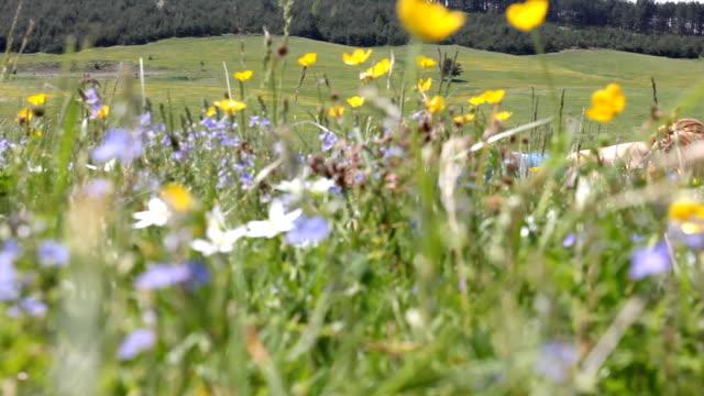 Girl in the field (HD)