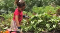 MS PAN Girl (4-5) planting tomato plant in vegetable garden / Richmond, Virginia, USA