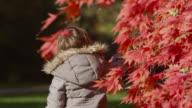 Girl pulls leaf from Japanese maple tree (Acer palmatum) in Autumn sunshine, Gloucestershire, England