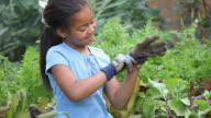 MS Girl (8-9) putting on gardening gloves in garden, Richmond, Virginia, USA