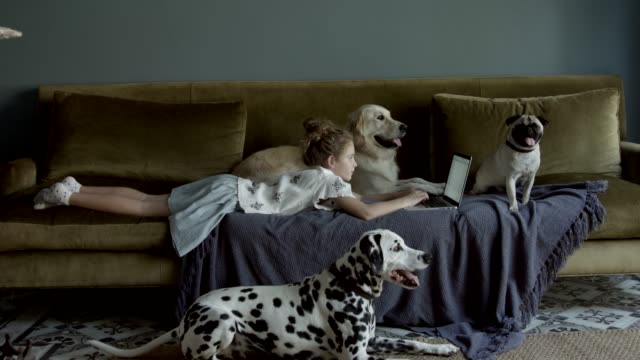 Girl using laptop while lying on sofa by dogs