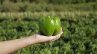 CU Girl's (12-13) hand holding green pepper / Lebonan Township, New Jersey, USA