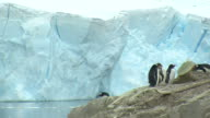Glacier calving with Penguins in foreground