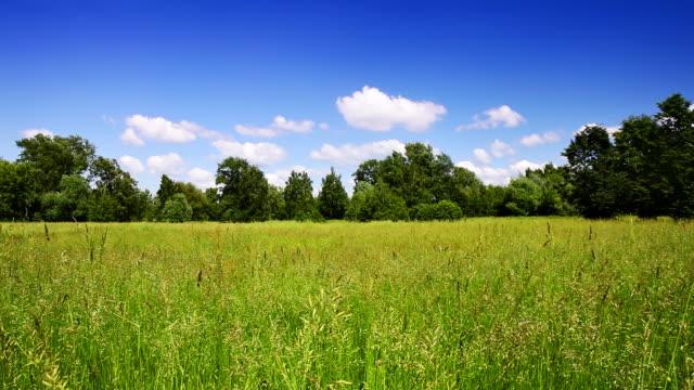 Radura della foresta e del cielo,