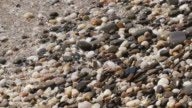 glittering stones on the beach