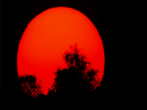 Glowing red sun sets behind scrub in outback, Australia