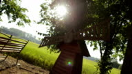Glowing sunshine through Leaves - Stock Footage