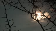 A glowing white sun shines behind gray storm clouds and thin, thorny branches. Available in HD.