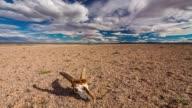 Gobi Desert at sunset