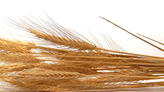 HD DOLLY: Gold Wheat Stems