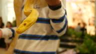 Golden Burmese Python