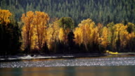 Golden fall colored trees along mountain lake shoreline with sunlight reflecting off water.