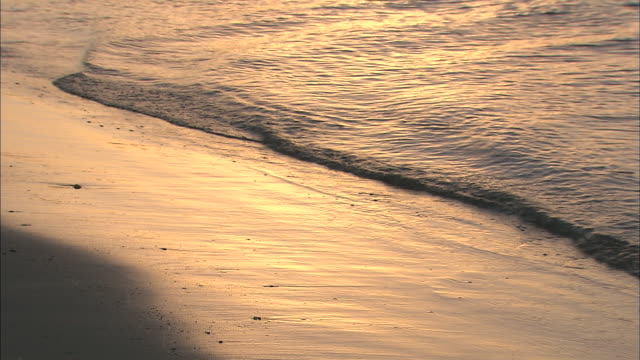 Golden sunlight illuminates gentle waves that wash onto a sandy beach.