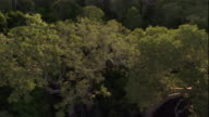 Golden sunlight shines on a forest canopy, Madagascar. Available in HD.