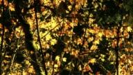 Golden tree branches in autumn.