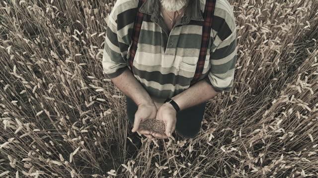 HD CRANE: A good harvest