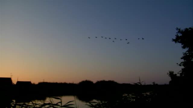 Goose (720p)