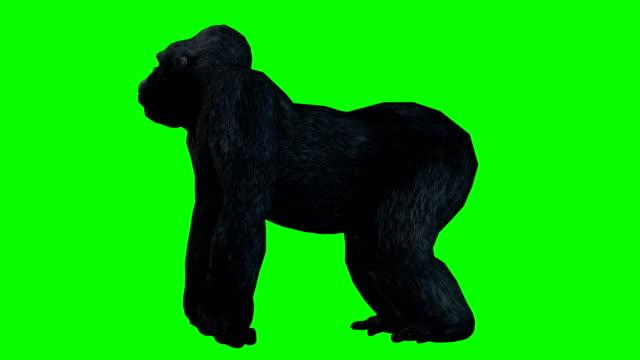 Gorilla Green Screen (Loopable)