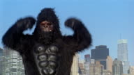 Gorilla pounding chest at camera and shaking fists / Manhattan high-rises in background / Long Island City, Queens, New York City