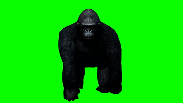 Gorilla Walking Green Screen (Loopable)