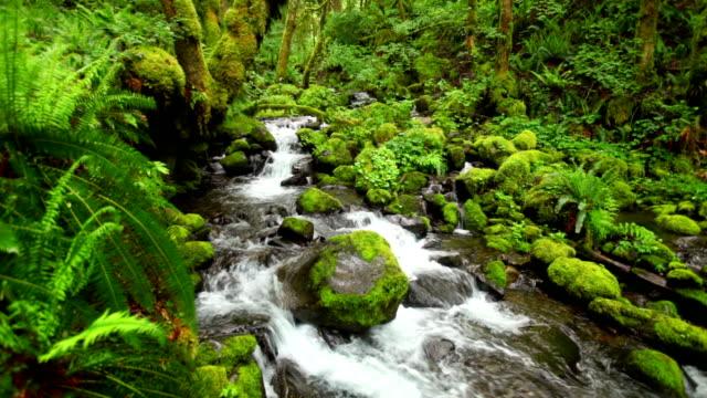 Gorton Creek through lush rainforest, Columbia River Gorge, Oregon, USA