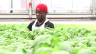 Gotham Greens facility on the roof of Brooklyns flagship Whole Foods Market in Greenpoint New York on May 15 Wide shot of a white female worker...