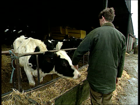 Government to announce aid packages for farmers ITN LIB Oxfordshire Ext BV Farmer stroking cow at trough Cows at grille as one with head through