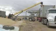 A grain feeder loads barley into a shipping container at a Riordan Group Pty grain depot near Lara Victoria Australia on Tuesday Feb 14 A front end...