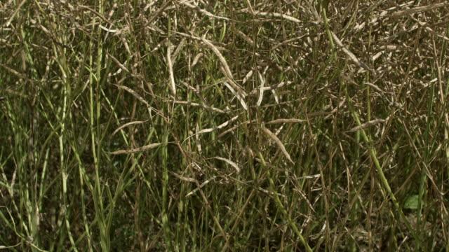 Grain field. Montage