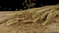 HD SUPER SLOW-MO: Grains Falling On Wheat Ears