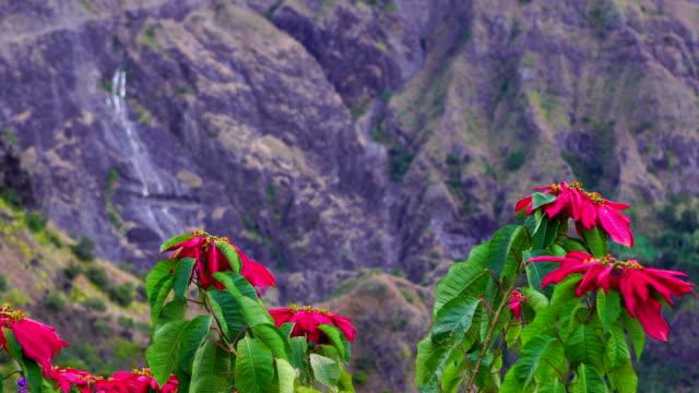 Grand Place in Reunion Island - Euphorbia pulcherrima