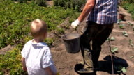 Grandfather with grandson harvest potatoes in plastic bucket