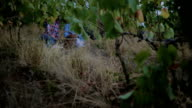Grandmother and grandchild in vineyard