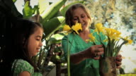 MS Grandmother and granddaughter (2-3) arranging yellow daffodils / Los Angeles, California, USA