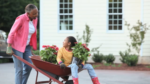 WS PAN Grandmother pushing granddaughter (8-9) in wheelbarrow, unloading zinnia flowers in front of home, Richmond, Virginia, USA
