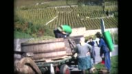 1968 grape harvesting, pouring into vats from baskets